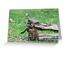 Barbary Monkeys,Primates, Small, young, babies, Animals,  Greeting Card