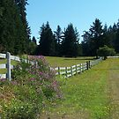 Fence Line by Gene Ritchhart