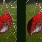 Dangling Autumn Leaf by angora998