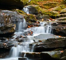 Autumn Waterfall  by Shelby Young