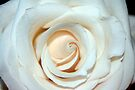 Cream Colored Beauty by RebeccaBlackman