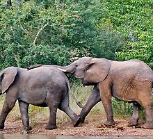 """elephant FRIENDS"" by grsphoto"