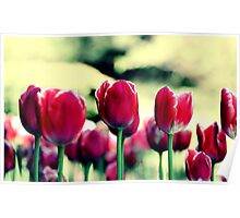 Highrise Tulips Poster