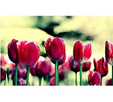 Highrise Tulips Photographic Print