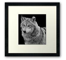 Silver Wolf Framed Print