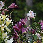 Lilies in the garden by vigor