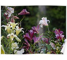 Lilies in the garden Poster