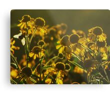Sneezeweed and the Bee Metal Print