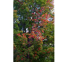 Tree of the Red and Green Photographic Print