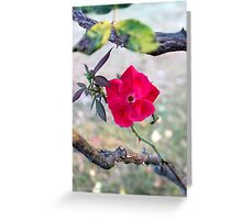 Wild Red Rose - 'Under The Rose' | Center Moriches, New York  Greeting Card
