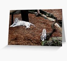 rare white tiger and cub Greeting Card