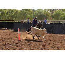 Glenn Powell - Comet Campdraft Photographic Print