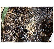 Natures Jewels Poster