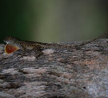 Here Lizard, Lizard by Raina DeVaney