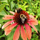 Bee Line by shutterbug2010