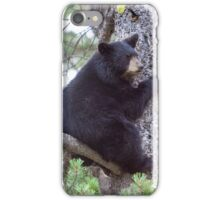 Baby Bear Cub in the Tree iPhone Case/Skin