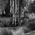 Sleepy willows by Helen Vercoe