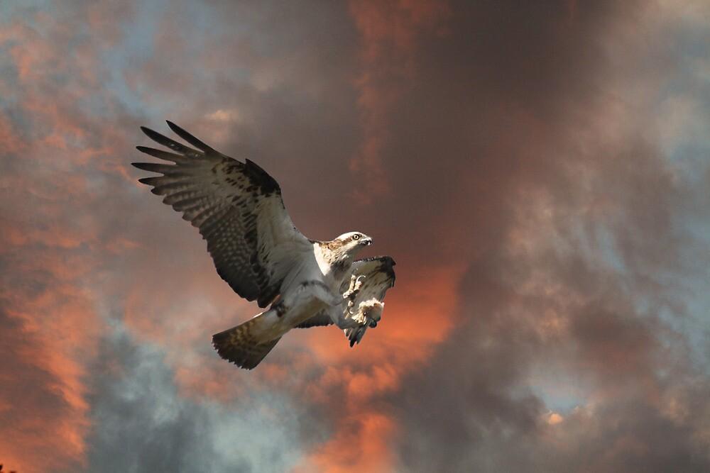 The Leap by byronbackyard