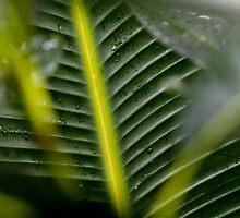 Leaf study- abstract 2 by john  Lenagan