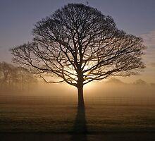 Morning Mist by Steve  Wallace