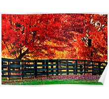 Kentucky Wooden Fence with Maples Poster