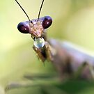 Mantis with bubble by jimmy hoffman