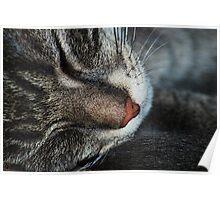 Sleeping Kitten Poster