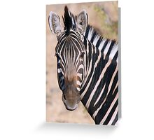 Chobe Zebra Greeting Card