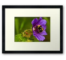 The Pollen Collector Framed Print