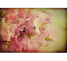 Sweet Peas Photographic Print
