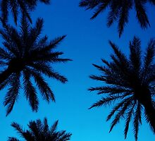 Luxor Palms by aureecejustin
