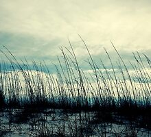 Sandy Grass by aureecejustin