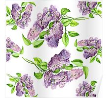 lilac blooming branch watercolor illustration.  Poster