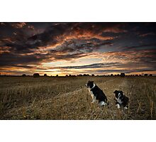 Harvest time Walk with the Dogs Photographic Print