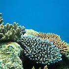 Flynn Reef, Cairns (Great Barrier Reef) QLD by sharonjr