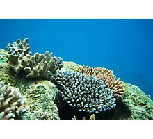 Flynn Reef, Cairns (Great Barrier Reef) QLD Photographic Print