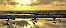 Seagull Sunset Strut by Helen Vercoe