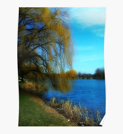 My Weeping Willow Tree ©  Poster