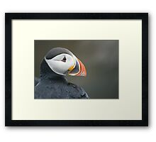 Newfoundland puffin Framed Print