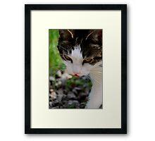 """""""Kitten"""" Framed Print"""