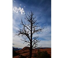 Reaching up to the sky Photographic Print