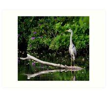 Heron - The Elegant Fisher Art Print