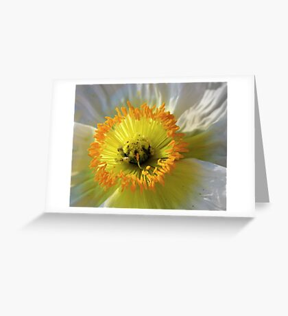 Wild Desert Poppy Greeting Card