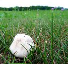 Giant Puffball by Marcia Rubin