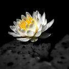 The Water Garden ~ Part Fourteen by artisandelimage
