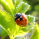 Morning Tea with Ladybug by Neeraj Nema