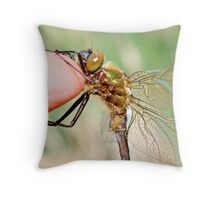 Brilliant Emerald, Somatochlora metallica on the photographer's finger.A Throw Pillow