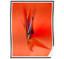 Orange Idyll Poster