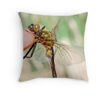 Brilliant Emerald, Somatochlora metallica on the photographer's finger. Throw Pillow