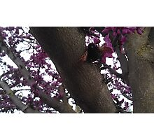 Bee in a Tree Photographic Print